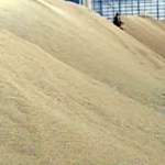 Thailand's rice stockpiles at record height