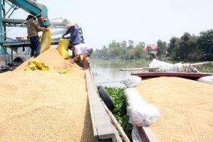 Vietnam rice1
