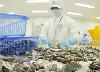 Vietnam's shrimp exports surge 15%