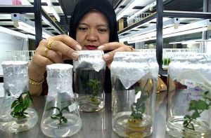 $1b investment in Malaysia's biotech sector