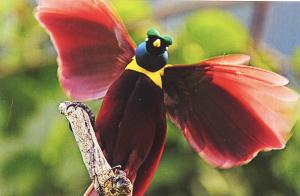 birdparadisebig