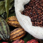 Philippines asked to boost cocoa industry