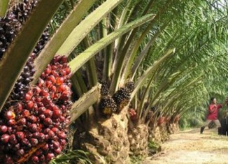 Palm oil exports from Indonesia rise 11%