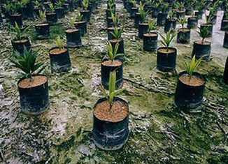 Indonesia world's largest palm oil producer