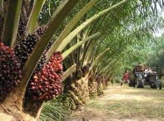 Palm oil giant all set for record IPO