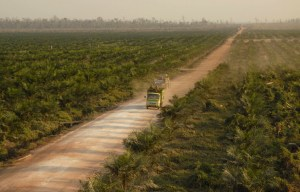 palm_oil_road