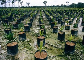 Malaysia palm oil businesses coming to Myanmar