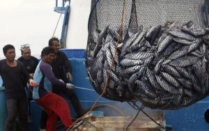 Philippine Purse Seine Fishing Operation