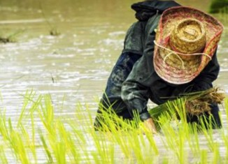 Thai rice scheme gets another cash injection