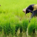 Chinese-Malaysian group eyes $2b rice investment