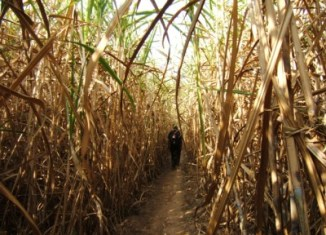 Wilmar International forms sugar venture in Myanmar