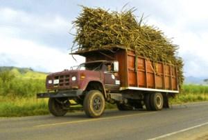 sugarcane-truck