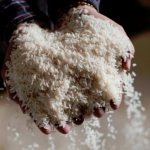 Rice prices surge on supply drop