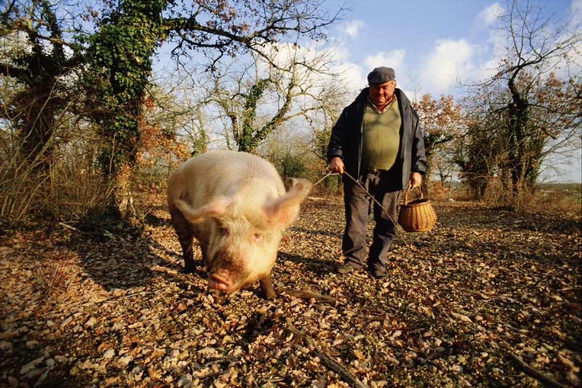 Truffle Hunting In Umbria And Provence Inviato Travel