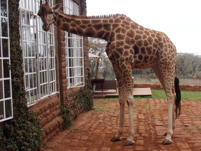 Back (again) to Giraffe Manor in Nairobi, Kenya