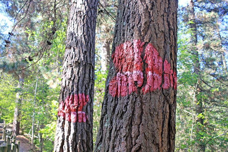 El beso, la primera obra del bosque de Oma