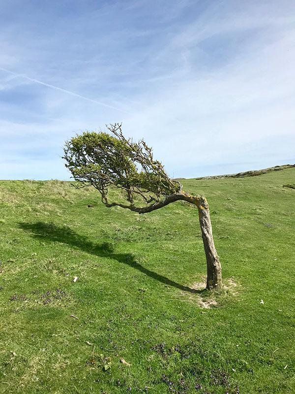 Consecuencias del viento.