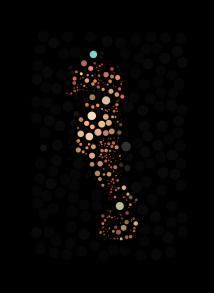 Seahorse Circles