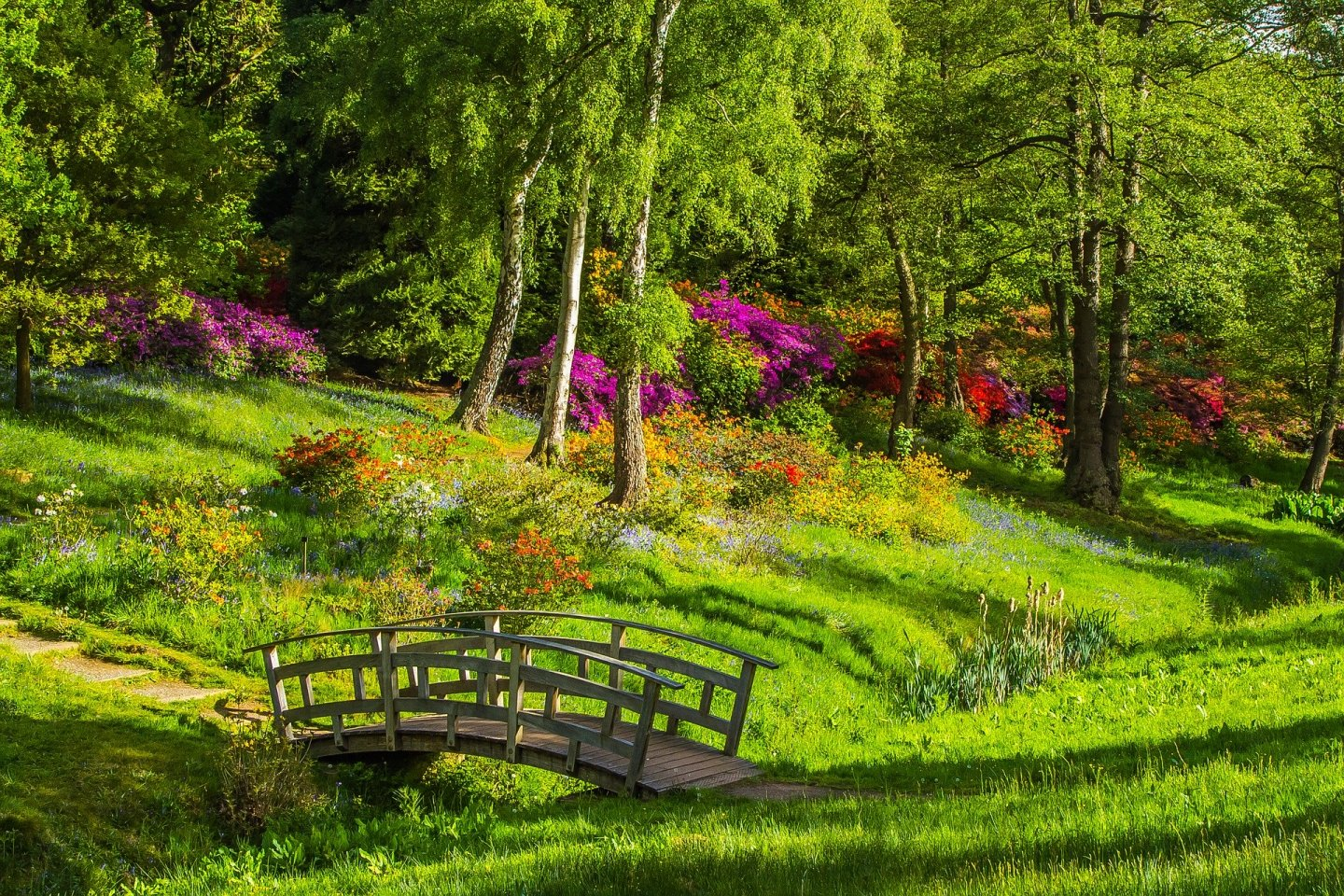 A beautifully rich photo of a park, with lots of lush green grass and tall trees, with a little colour from some pink plants to the back. There's a small wooden bridge to the front.