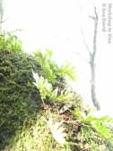 AnDav_10_2011-1