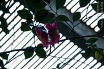 JoaoGir_02_2012-1
