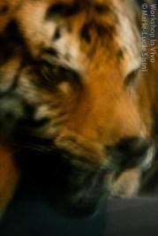 MLucSi_07_2012-5