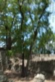 TomLouro_07_2012-8