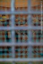Preso | Imprisoned