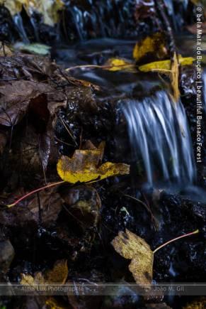 Veludo de outono | Autumn velvet