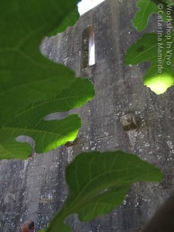 CatMam_07_2012-12