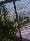PaulaS_02_2012-2