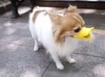 hondeend