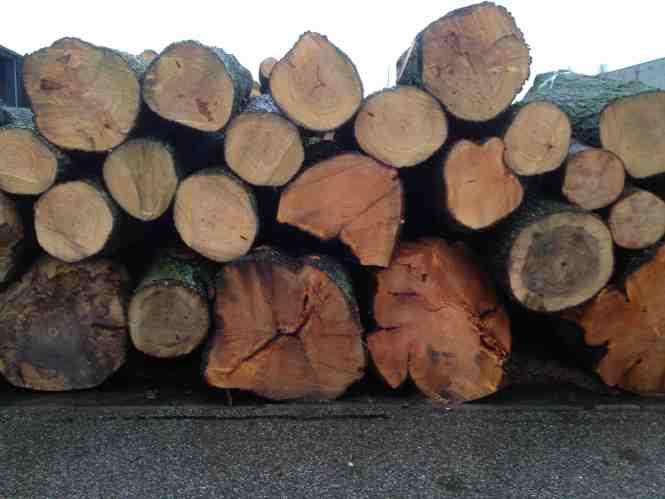 Bomen kappen met het kappen