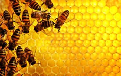Šiek tiek apie medų…