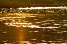 Tramonto sul fiume Zambesi alle Cascate Vittoria