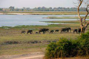 Elefanti al Parco Chobe, Botswana