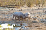 Rhino Halali
