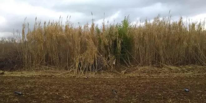 Come preparare capanno caccia cornacchie