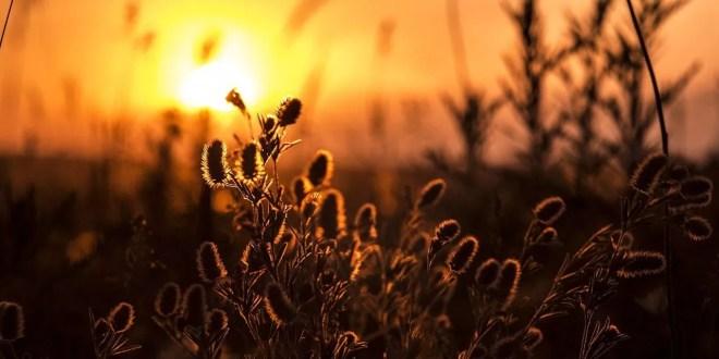 Anuu sul passo migratorio: Lucifero e il caldo eccezionale