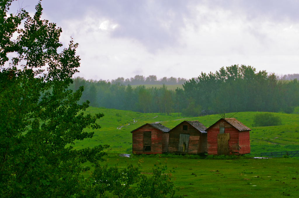 Old Sheds Love the Rain