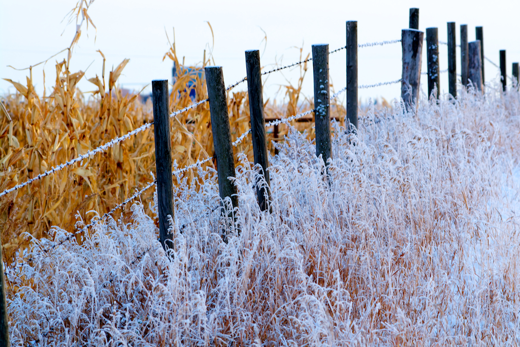 Scene From a Frosty, Alberta Prairie