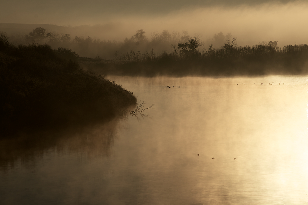 Foggy Alberta Morning