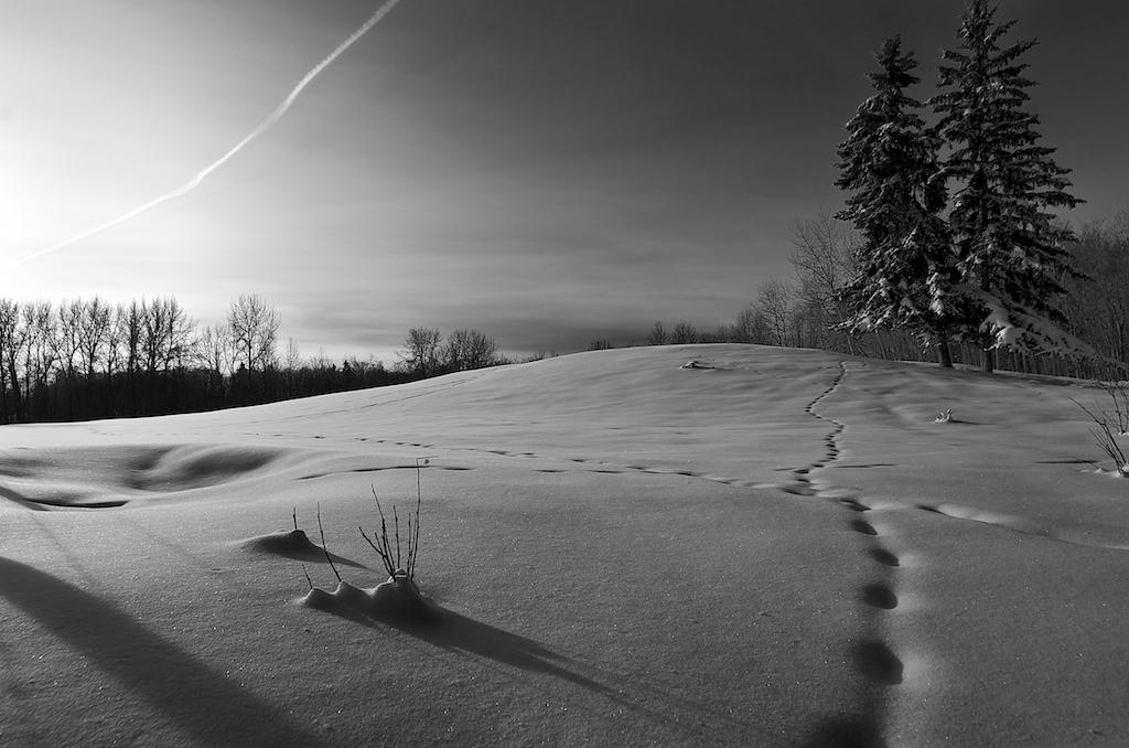 winter-alberta-snow