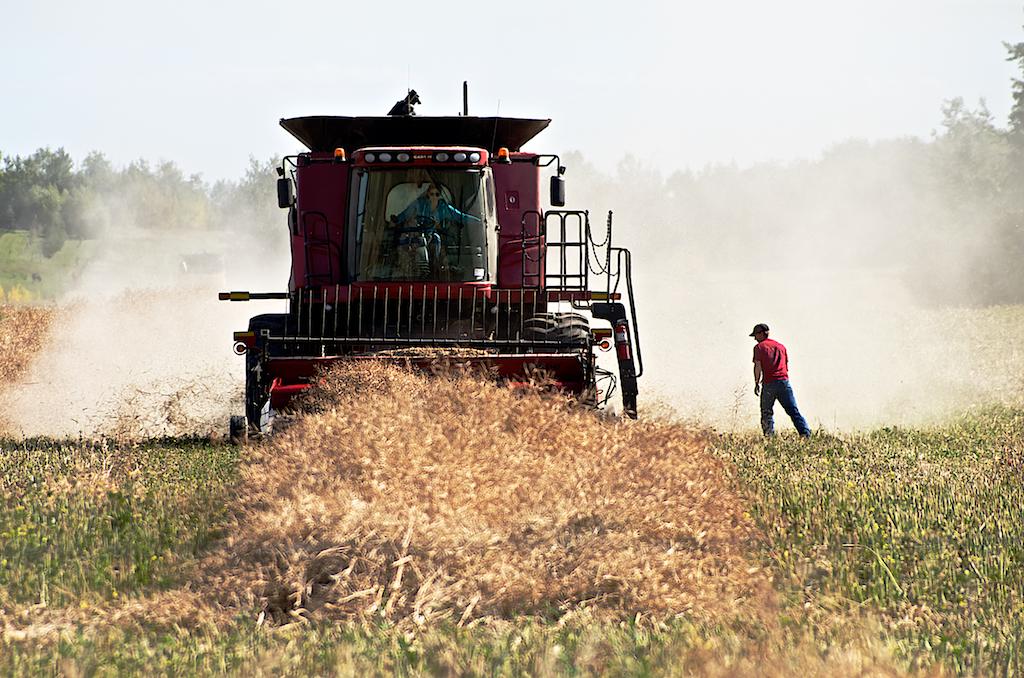 Alberta Harvest Time - Combining