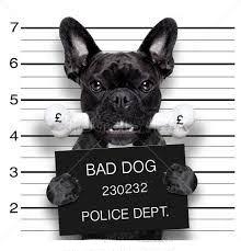 bad dog 2