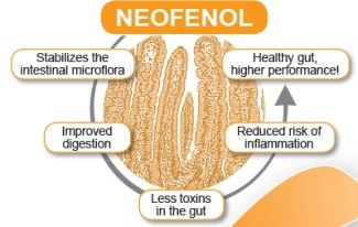 Neofenol mode of action