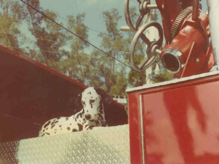 Fire Truck with Dalmation