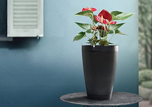 Parrot Pot - Connected Flower Pot