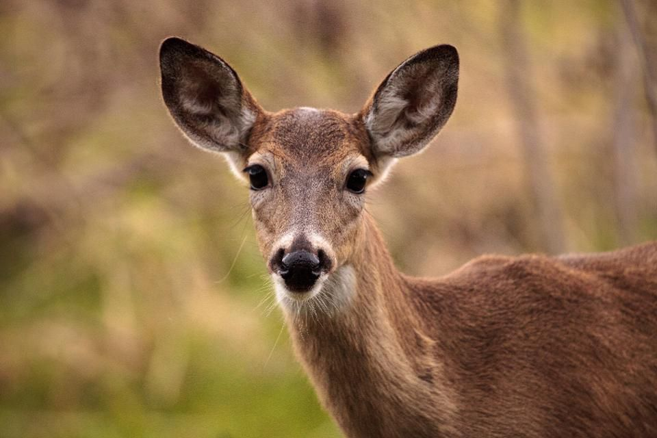 RFID Monitoring System and Management on Deer Husbandry