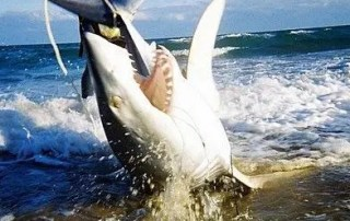 Miami Beach Shark Fishing Charters